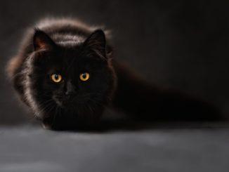10 kemampuan super kucing layaknya pasukan ninja